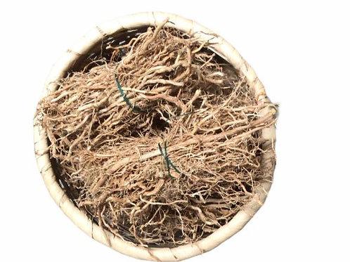 Violet root