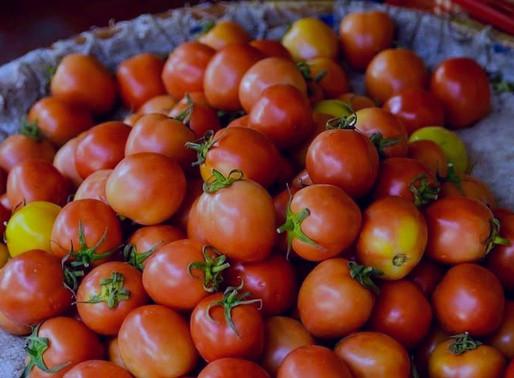 🇬🇧 🇩🇪 🇪🇸 Harvesting Locally