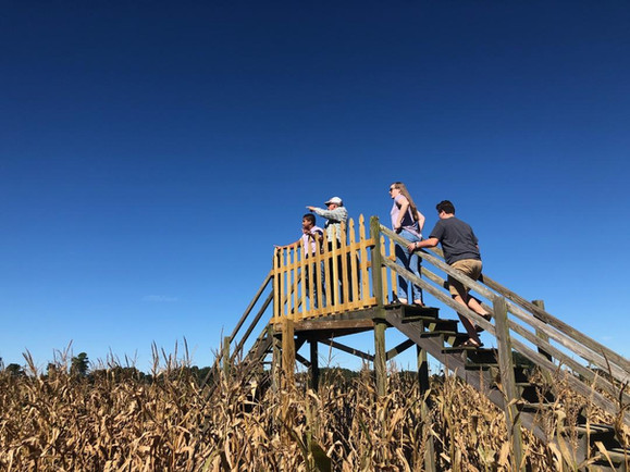Corn Lookout.jpg