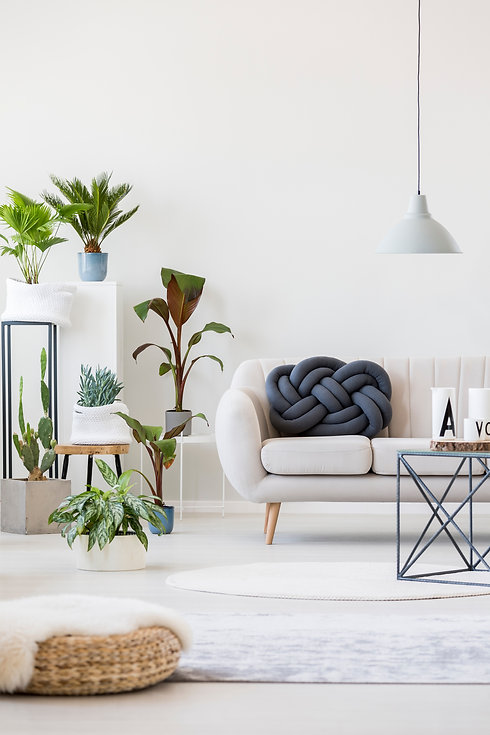 Fresh potted plants in bright living roo