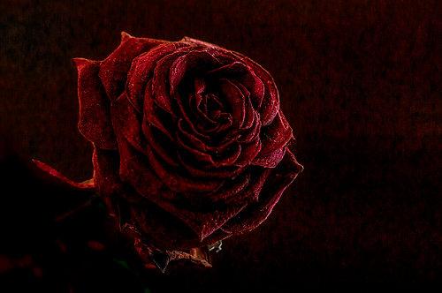 100x150 cm Red