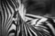 patterns kopie.jpg