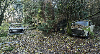 1511-Lost in the woods-072-110x60 kopie.