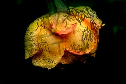 100x150 cm T-rose