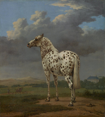 Paulus Potter : het gevlekte paard 107x120 cm