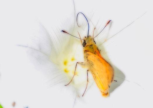 Vlindertje 100x150 cm
