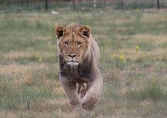 animalworld1.jpg