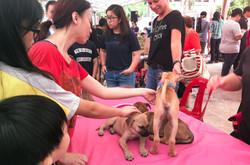 Adoption Drive 2017 - Singapore 3