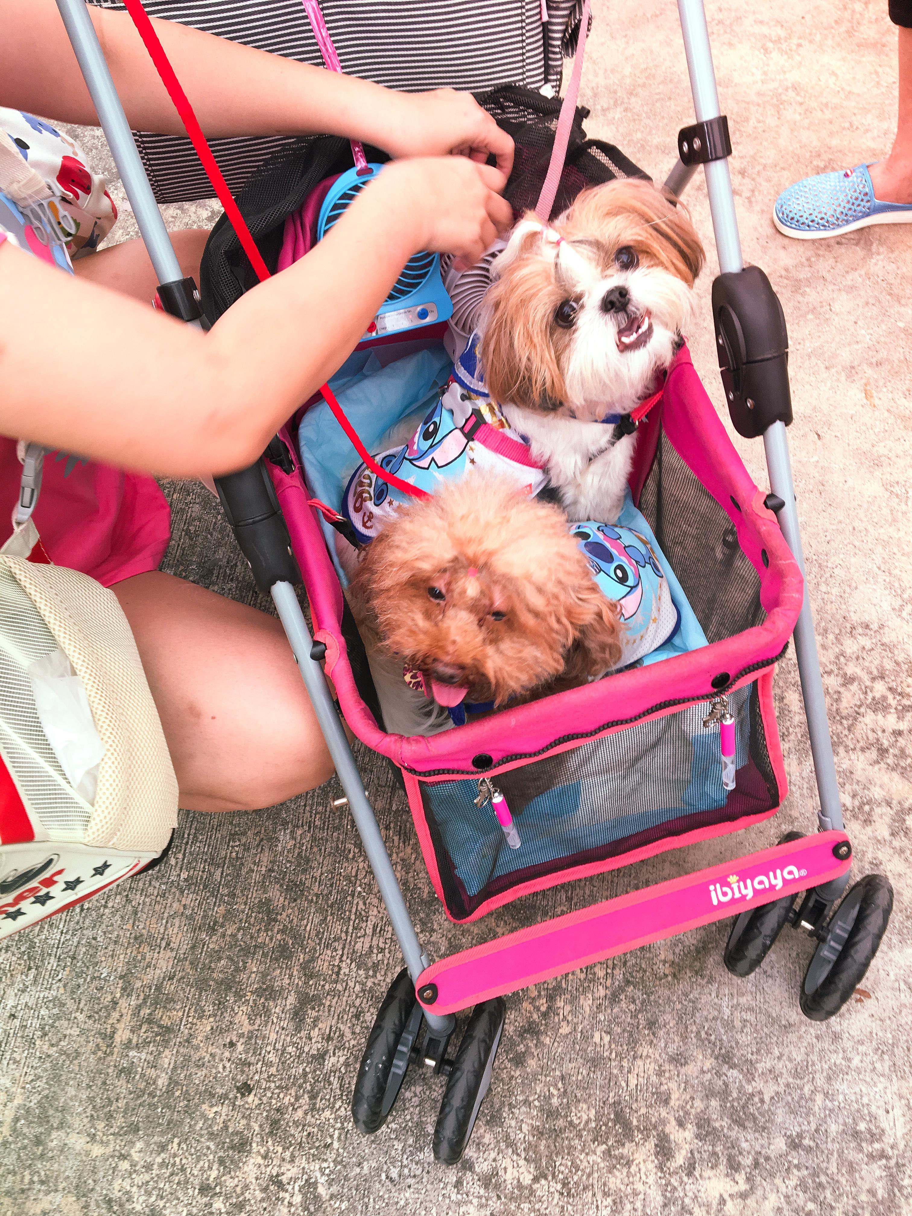 Adoption Drive 2017 - Singapore 8