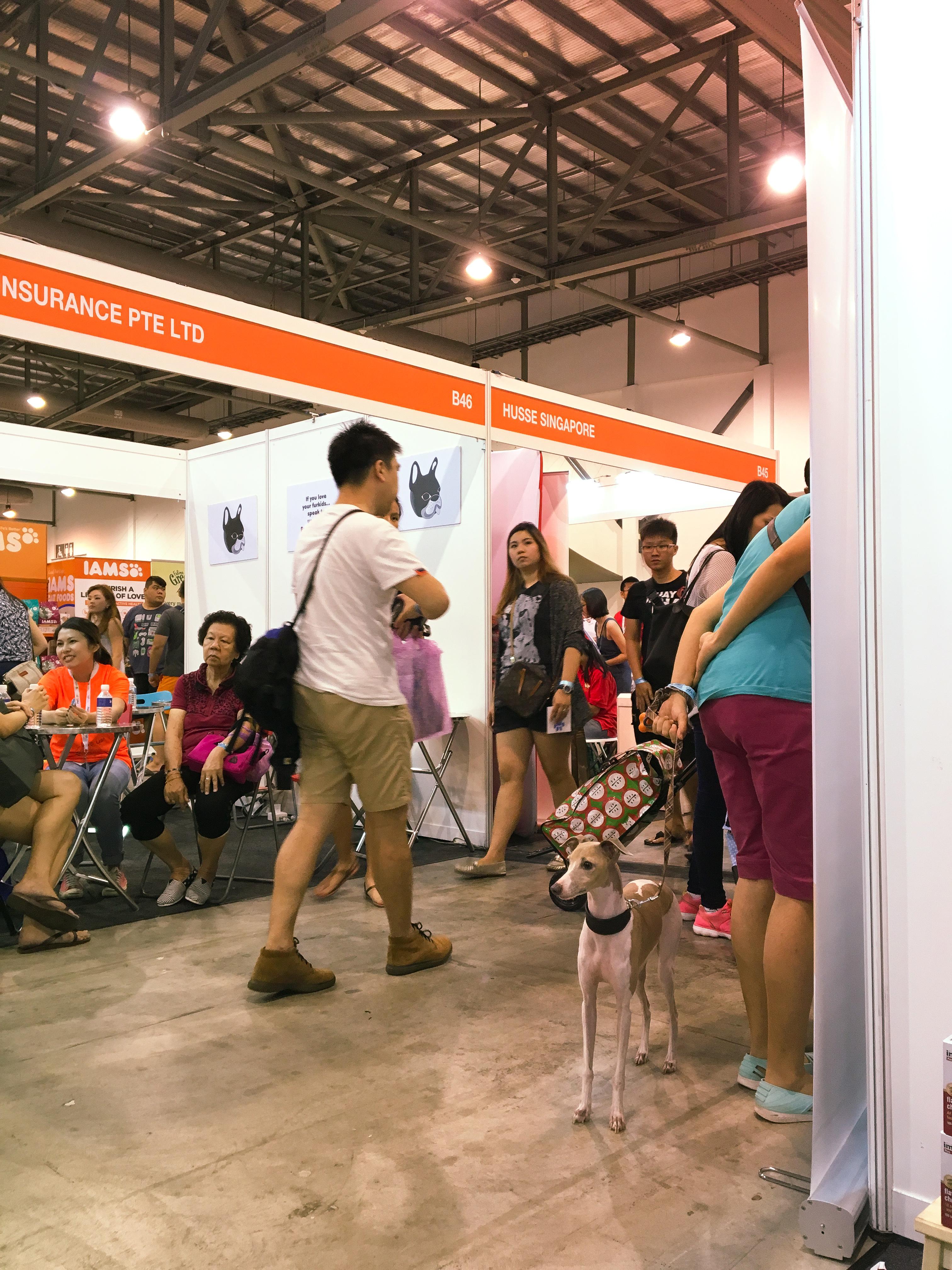 Pet EXPO 2016 - Singapore 13