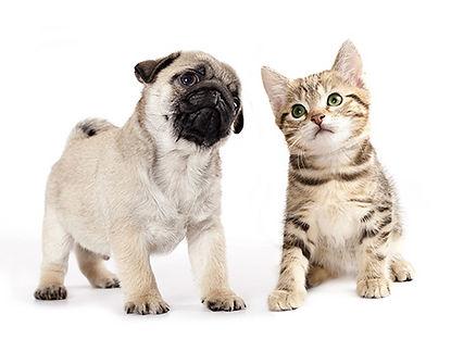 dog cancer, animal health and skin problems