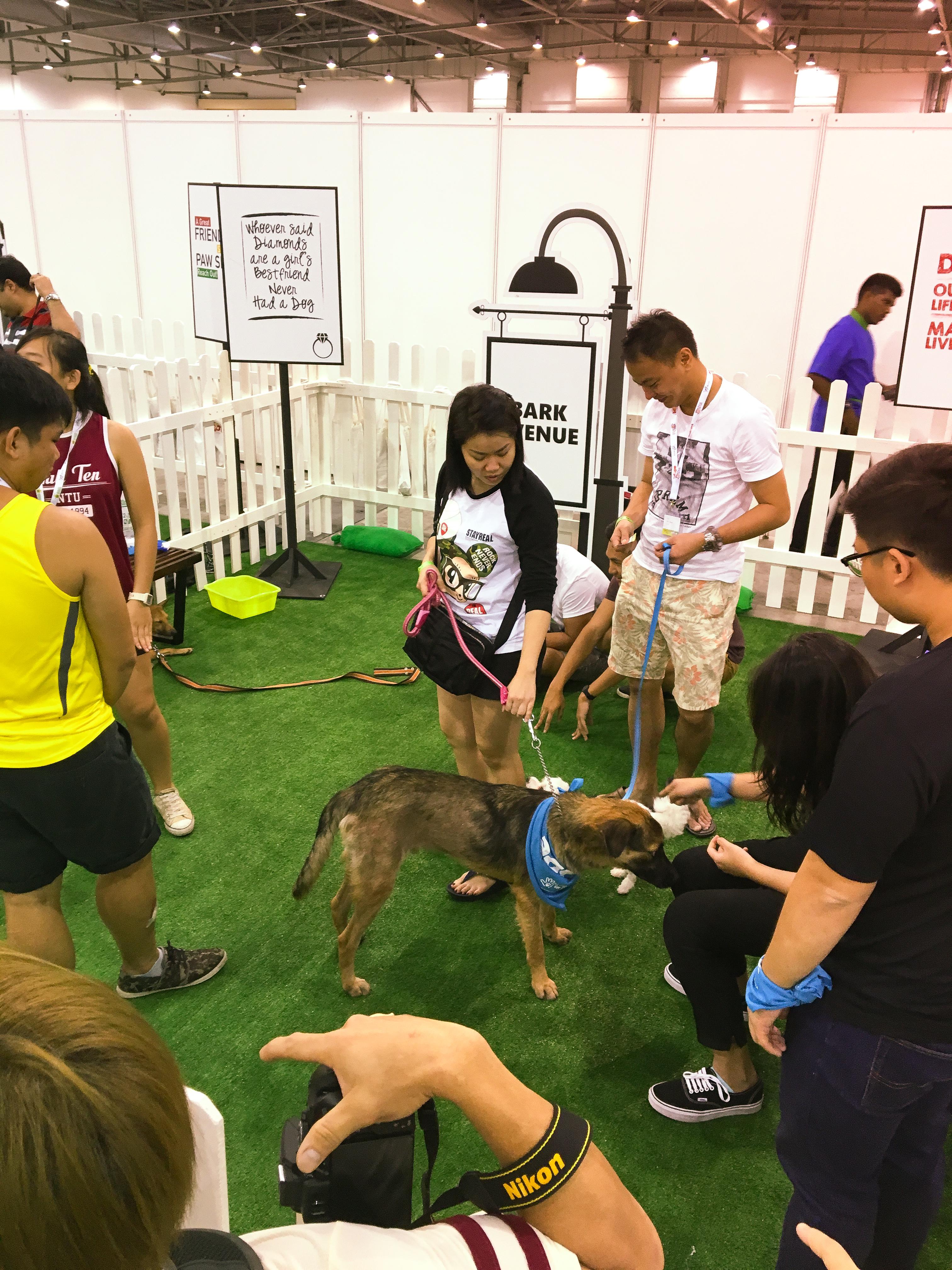 Pet EXPO 2016 - Singapore 8