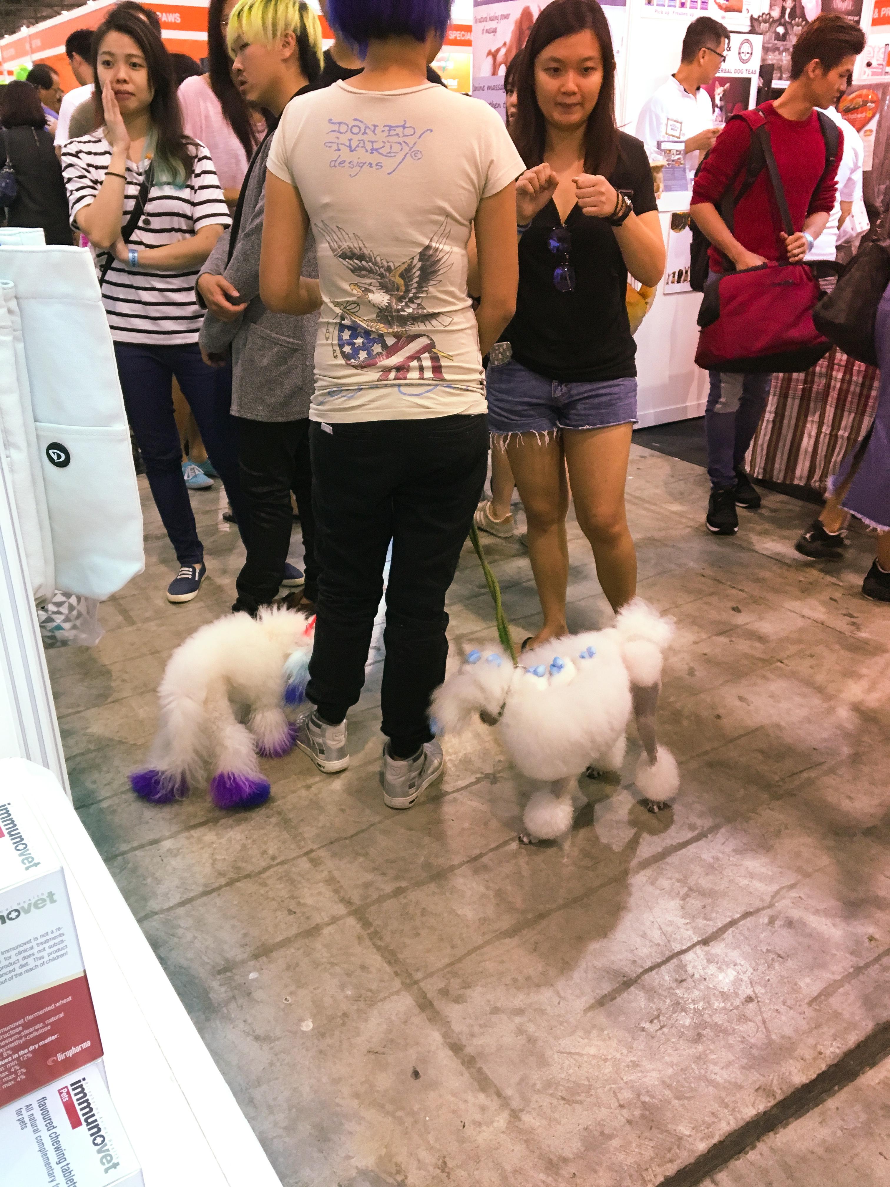 Pet EXPO 2016 - Singapore 12