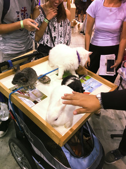 Pet EXPO 2016 - Singapore 1