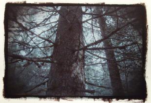 Saarineva Forest