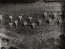 Cache Creek Skulls