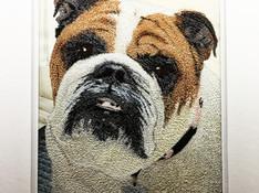 Bulldog_Ally.jpg