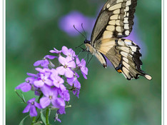ButterflyPhoto.jpg