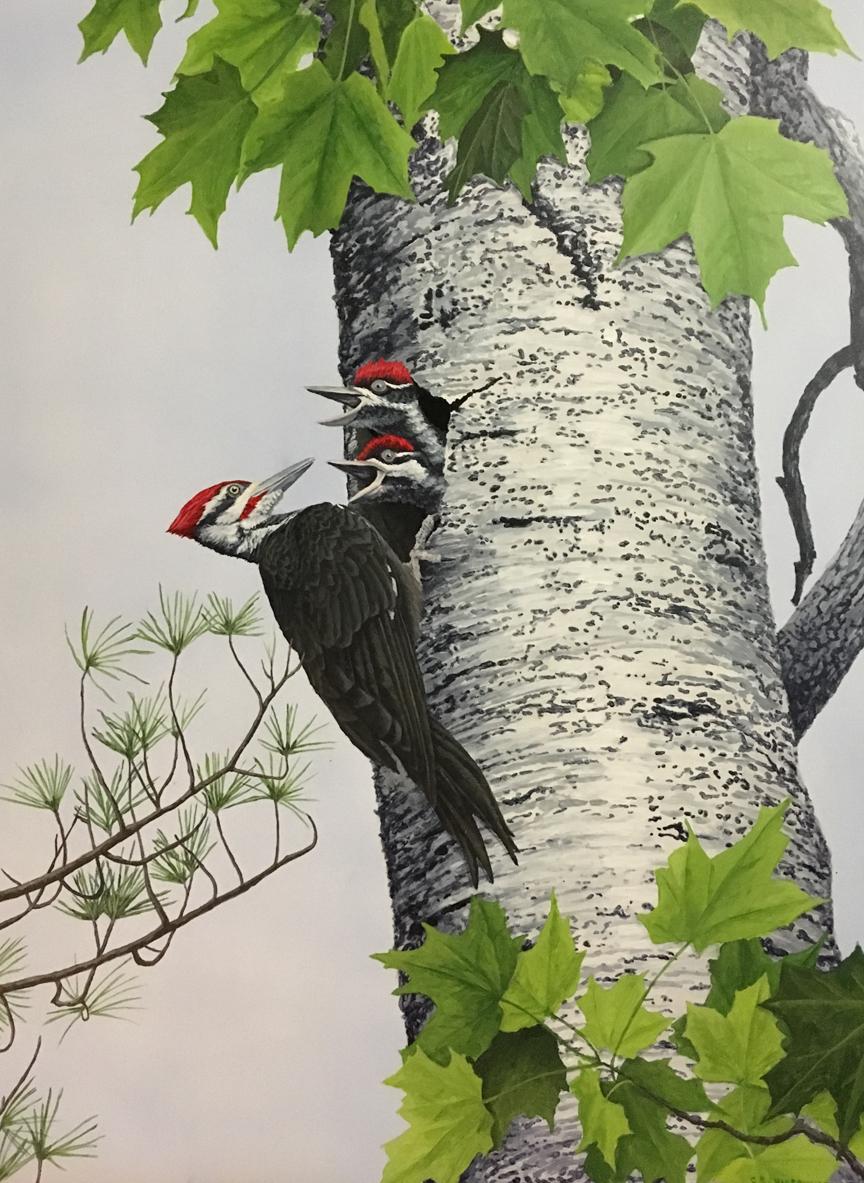Rachel_Woodpeckers_Smaller