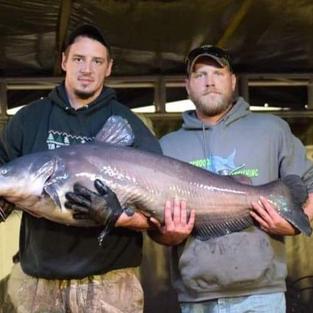 Blacksheep Catfishing