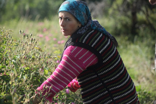 The Girl with a Pearl Earring In a Field Picking Flowers Or What? - Burdur Turkey 2014