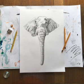 Elephant in Tonal Pencil