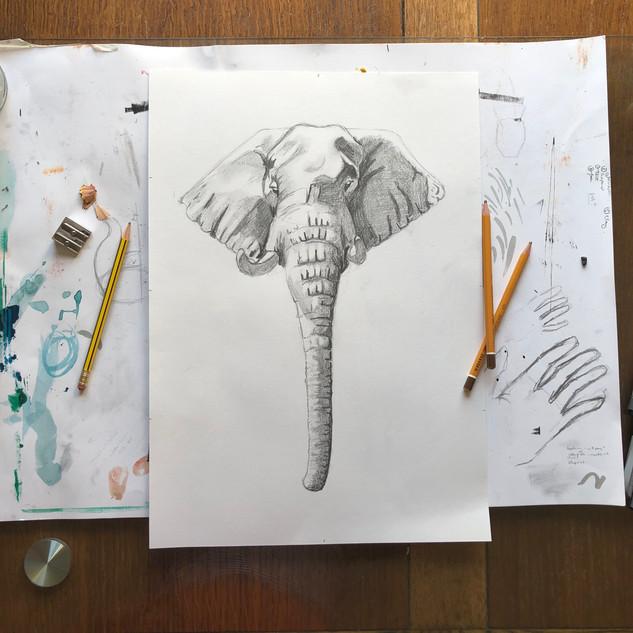 Elephant in Tonal Pencil