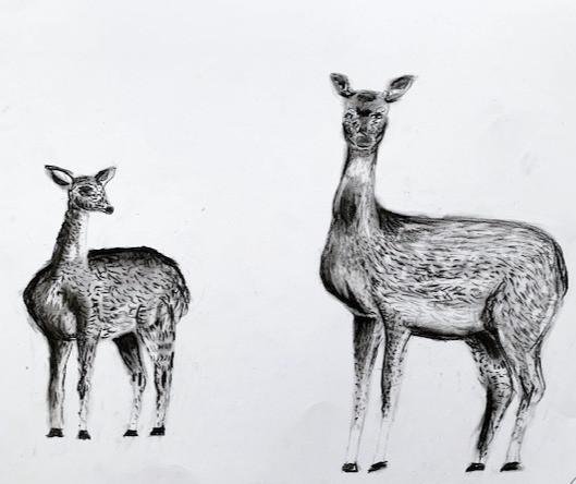 Charcoal Deer