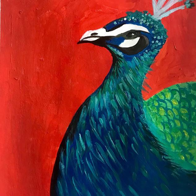 Acrylic Peacock