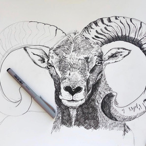 Ram Portrait in Pen