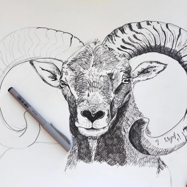 Ram Portrait in Pen