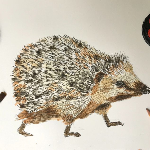 WaterColour & Pen Hedgehog