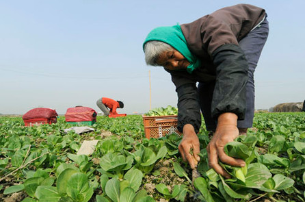 Farmers in the outskirts of Shanghai, China.