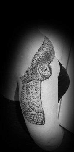 Barn Owl Tattoo in Dotwork
