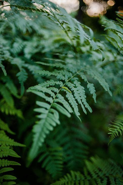 foto.ieva.mežs (3).jpg