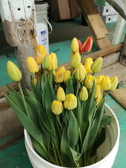 Tulipe jaune 40cm