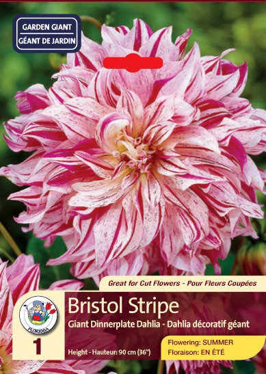 Bristol Stripe