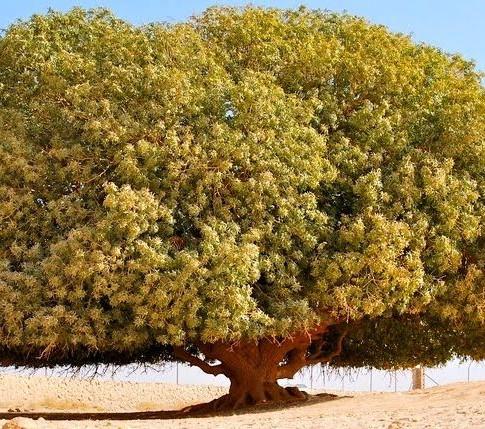 Jordan The Blessed Tree.jpeg