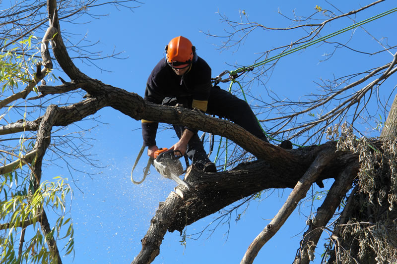 Image result for tree trimming experts