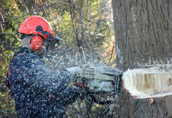 tree-cutting-with-chainsaw