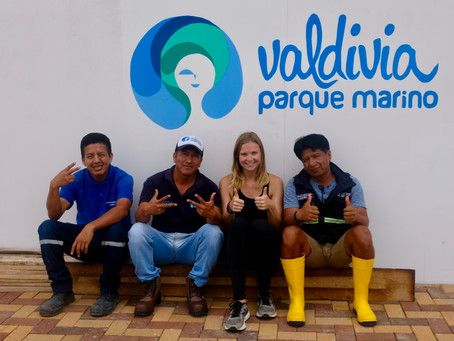 Volunteering at Parque Marino Valdivia near Ayampe, Olón and Montañita.