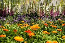 taimedemaailm.jpg