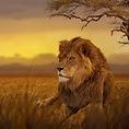 KENYA LION SQUARE (1).png
