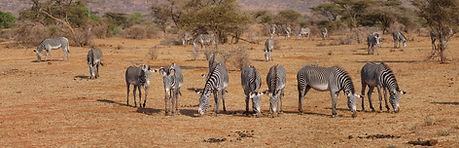 zebra-2668655_1920.jpg