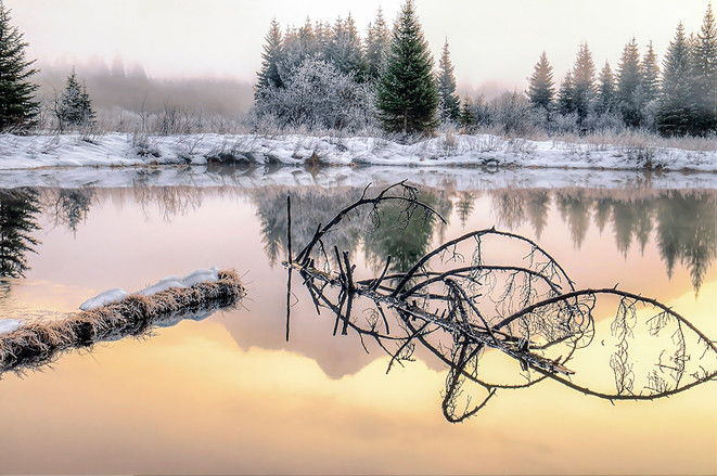 Ibex Reflection on Bull River