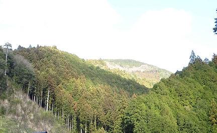 kouchi-forest-1.jpg