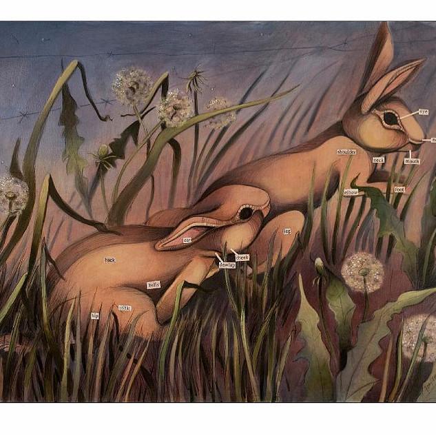 Rabbit Anatomy I