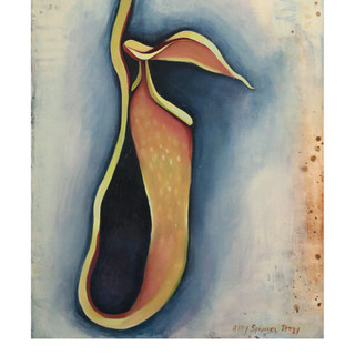 Pitcher Plant II