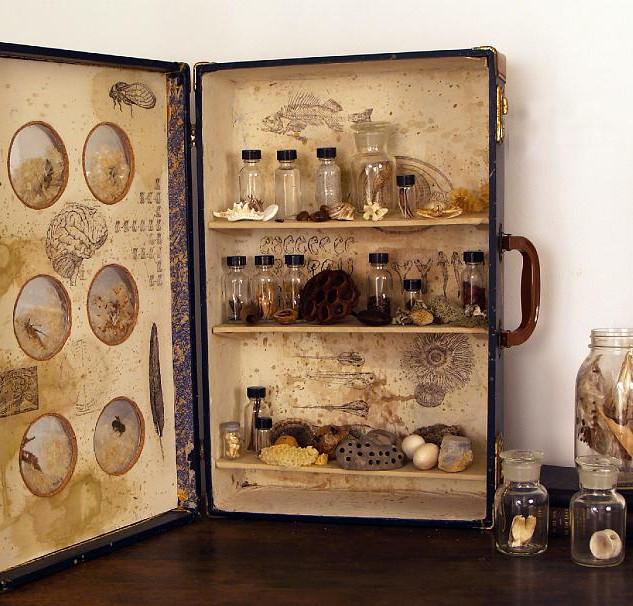 Cabinet of Curiosity
