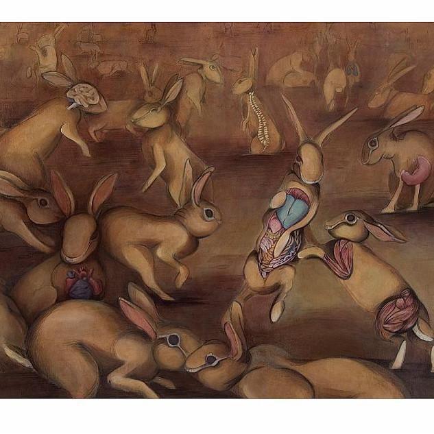 Rabbit Anatomy II
